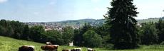 Panorama me%c3%9fstetten sommer mit kuehen