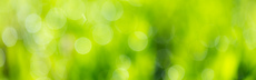 Green9682404