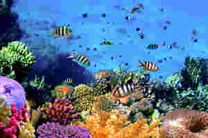 folgen zerstörung von korallenriffen