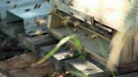 Bienen und pflanzen