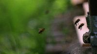 Neu 41 bienen am flugloch 1408